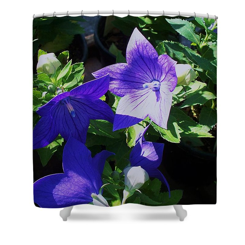 Landscapes Shower Curtain featuring the photograph Baloon Flower by Eric Schiabor