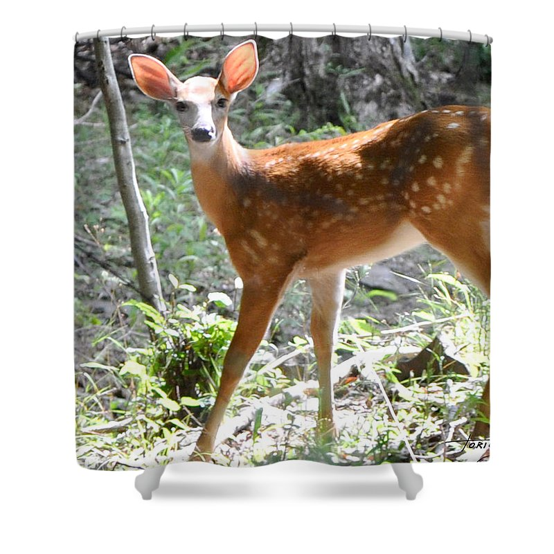 Faunagraphs Shower Curtain featuring the photograph Bambi1 by Torie Tiffany