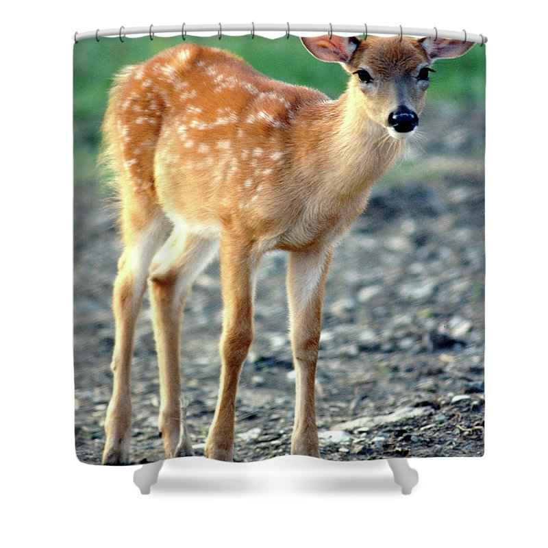 Faunagraphs Shower Curtain featuring the photograph Bambi2 by Torie Tiffany