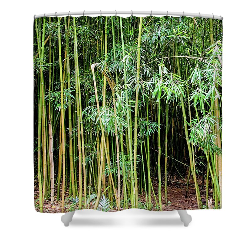 Bamboo Chimes Shower Curtain featuring the photograph Bamboo Chimes, Waimoku Falls Trail, Hana Maui Hawaii by Michael Bessler