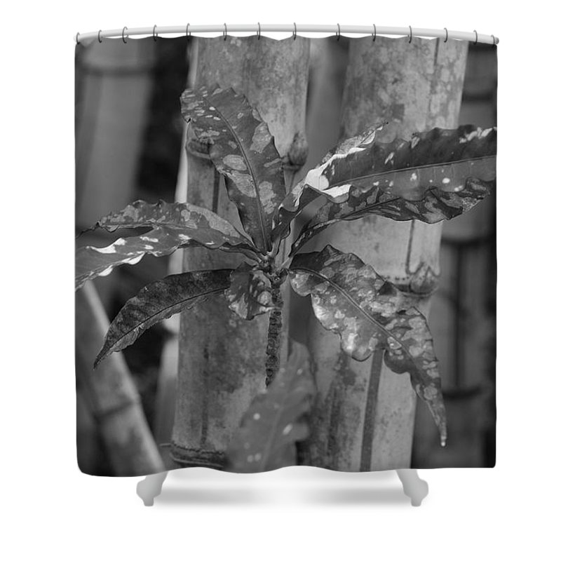 Macro Shower Curtain featuring the photograph Bamboo Flower by Rob Hans
