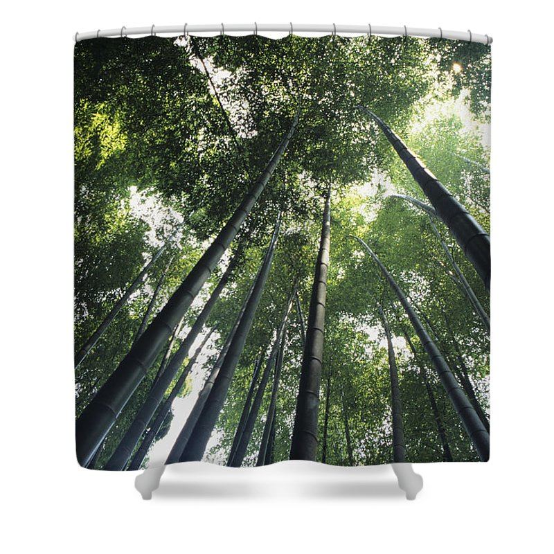 Area Shower Curtain featuring the photograph Bamboo Forest by Mitch Warner - Printscapes