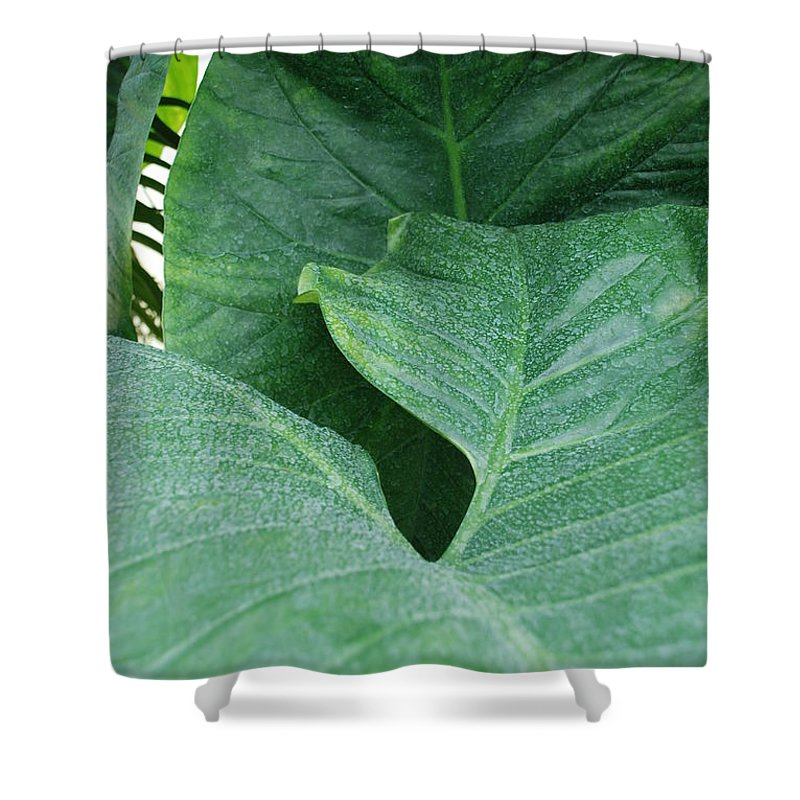 Macro Shower Curtain featuring the photograph Banana Leaves by Rob Hans