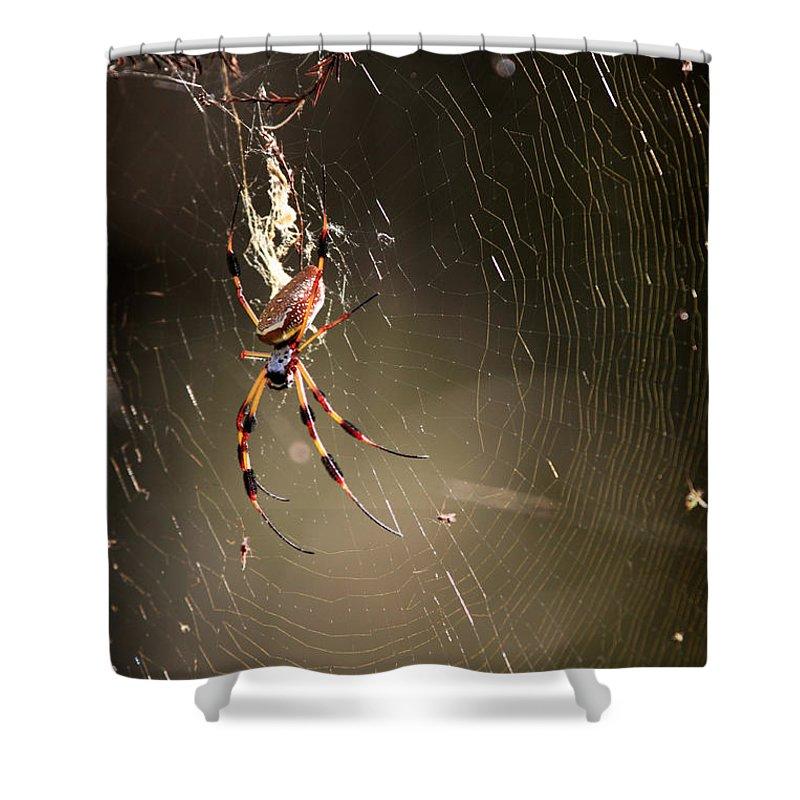 Banana Spider Shower Curtain featuring the photograph Banana Spider by Matt Suess