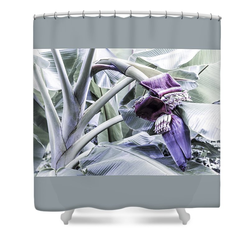 Banana Shower Curtain featuring the photograph Banana Beginnings In Cool Shades by Kerri Ligatich