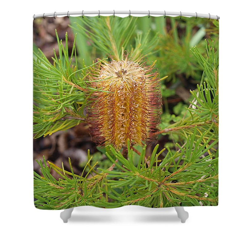 Banksia Spinulosa Shower Curtain featuring the photograph Banksia Spinulosa by Michaela Perryman