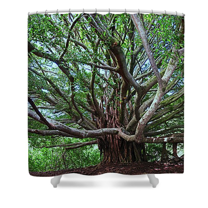 Hana Maui Hawaii Haleakala National Park Banyan Tree Shower Curtain featuring the photograph Banyan Tree by James Roemmling