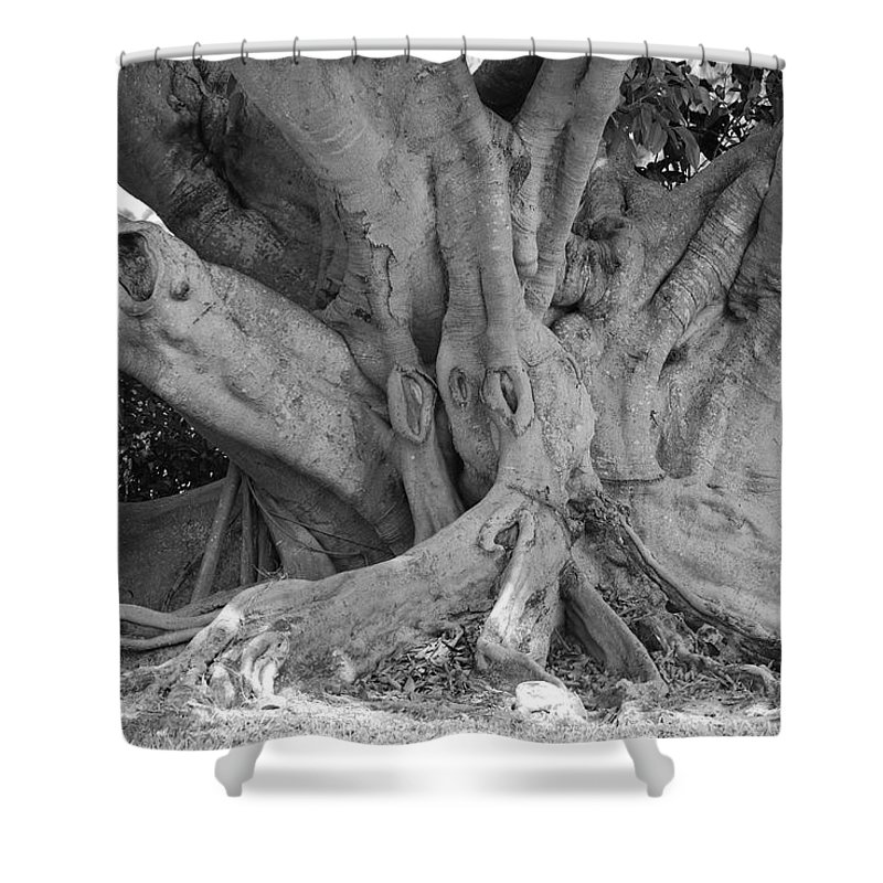 Tree Shower Curtain featuring the photograph Banyan Tree by Rob Hans