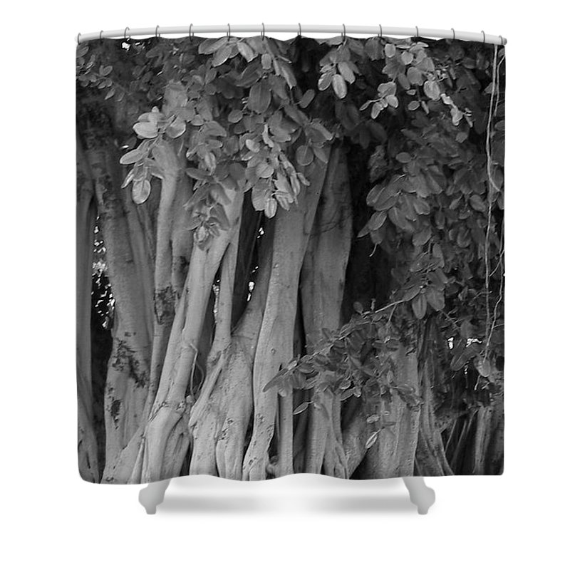 Shower Curtain featuring the photograph Banyans by Maria Bonnier-Perez