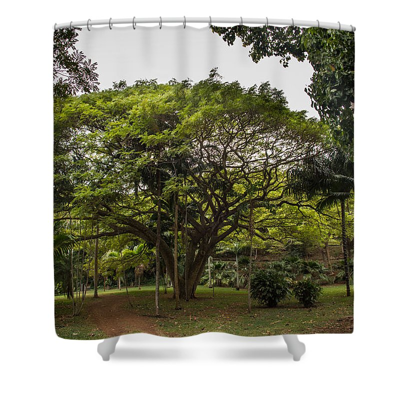 Landscape Shower Curtain featuring the photograph Banyon Monkeypod Landscape II by Sharin Gabl