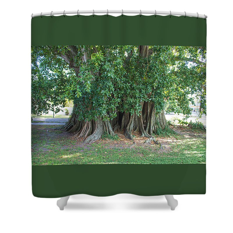 Banyan Tree Nature Florida Shower Curtain featuring the photograph Banyon Tree by Tom Handley