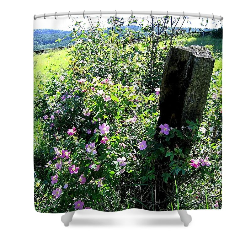 Wild Roses Shower Curtain featuring the photograph Barbed Wire And Roses by Will Borden