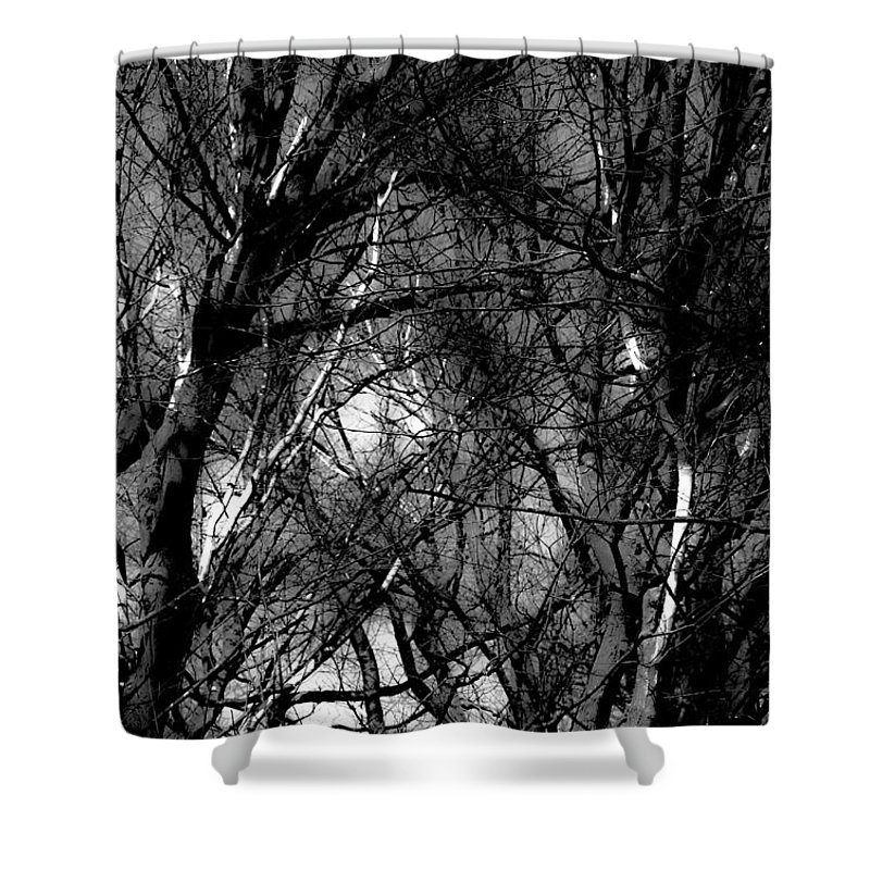 Black & White Shower Curtain featuring the photograph Bare Trees II by Donna Fonseca Newton