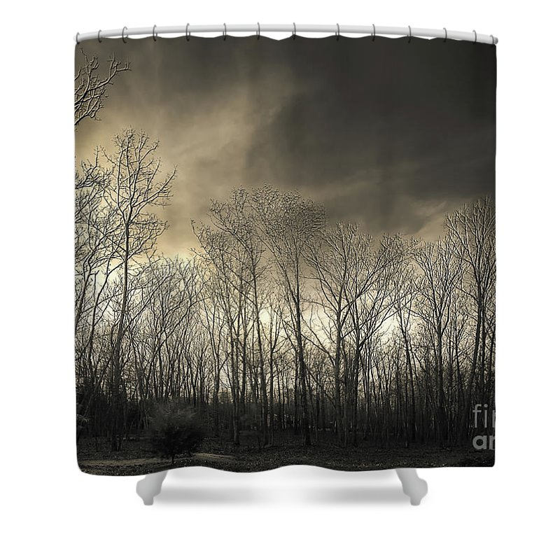 Tokina Wide Angle Test Shots Shower Curtain featuring the photograph Bare Trees In A Winter Sunset by Jennifer Mitchell