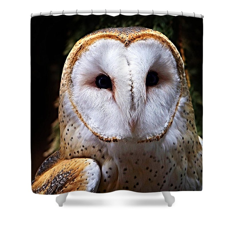 Barn Owl Shower Curtain featuring the photograph Barn Owl by Anthony Jones