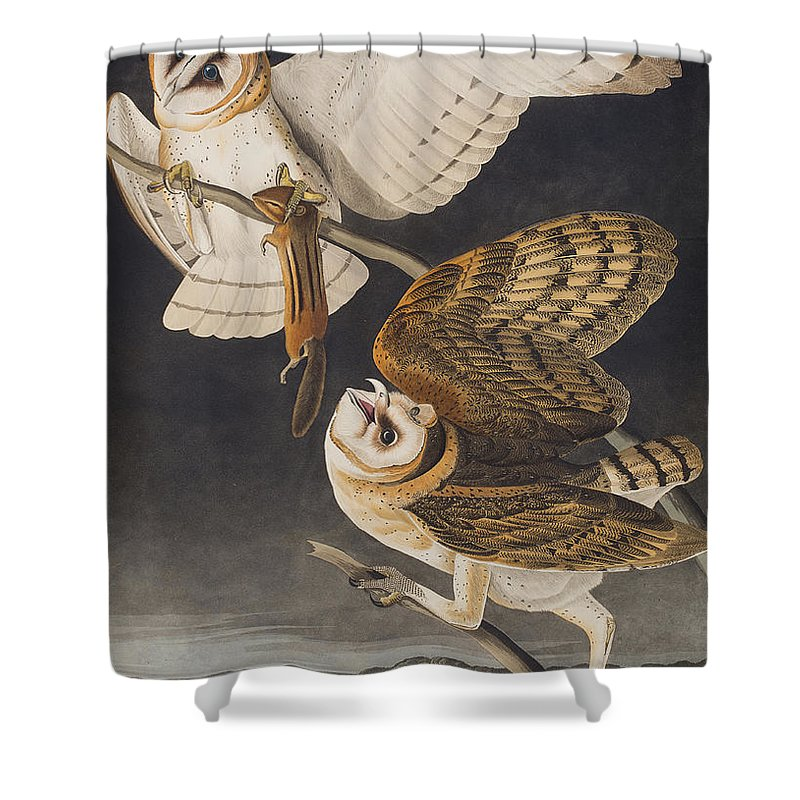 Barn Owl Shower Curtain featuring the painting Barn Owl by John James Audubon