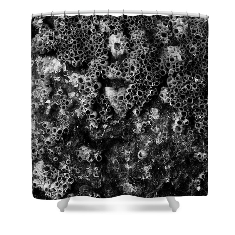 Barnacles Shower Curtain featuring the photograph Barnacles Two by Lyle Crump
