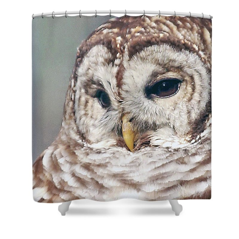 Owl Shower Curtain featuring the photograph Barred Portrait by Gina Fitzhugh