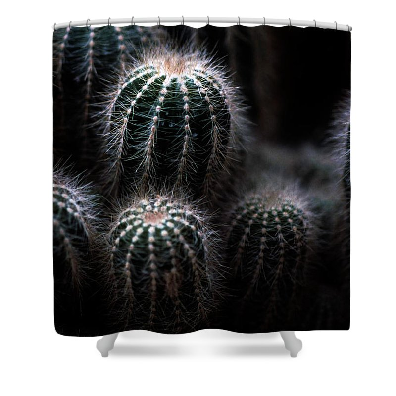 Brrel Cacus Shower Curtain featuring the photograph Barrel Cactus by Laurie Paci