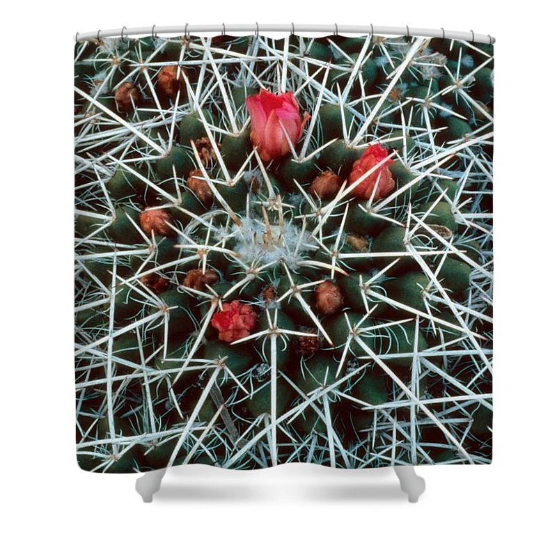 Barrel Cactus With Pink Blooms Shower Curtain featuring the photograph Barrel Cactus With Pink Blooms by Laurie Paci