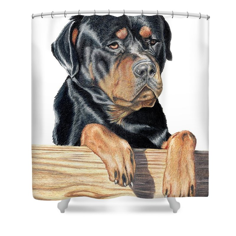 Dog Shower Curtain featuring the drawing Bart by Kristen Wesch