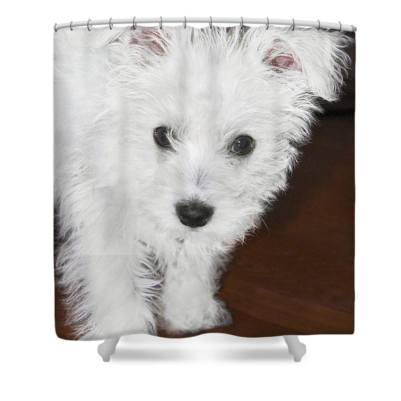 Shower Curtain featuring the photograph Bashful Puppy by Terri Waters