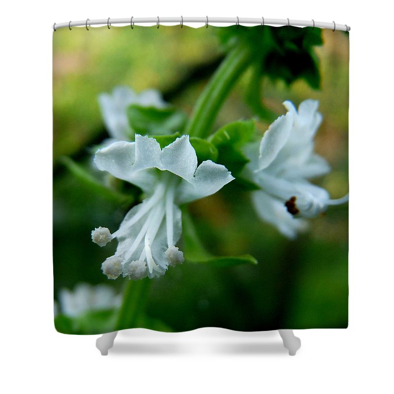 Basil Shower Curtain featuring the photograph Basil Bloom by Valerie Ornstein