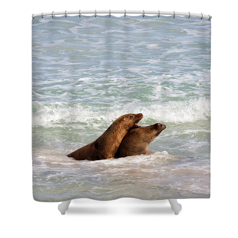 Sea Lion Shower Curtain featuring the photograph Battle For The Beach by Mike Dawson
