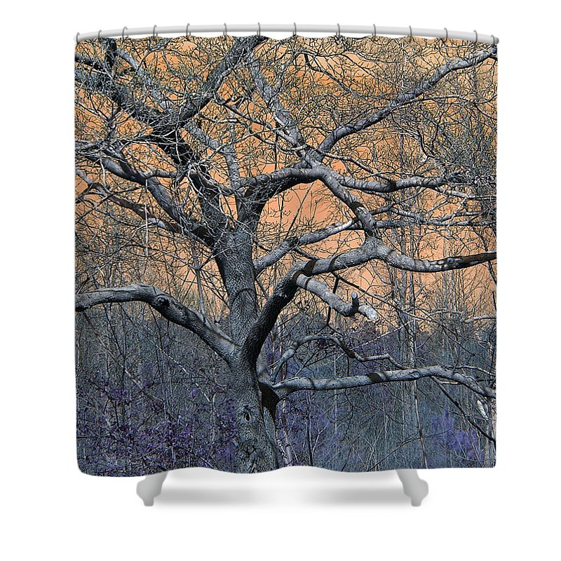 Trees Tree Woods Nature Outdoors Plants Shower Curtain featuring the photograph Bb's Tree 2 by Lisa Stanley