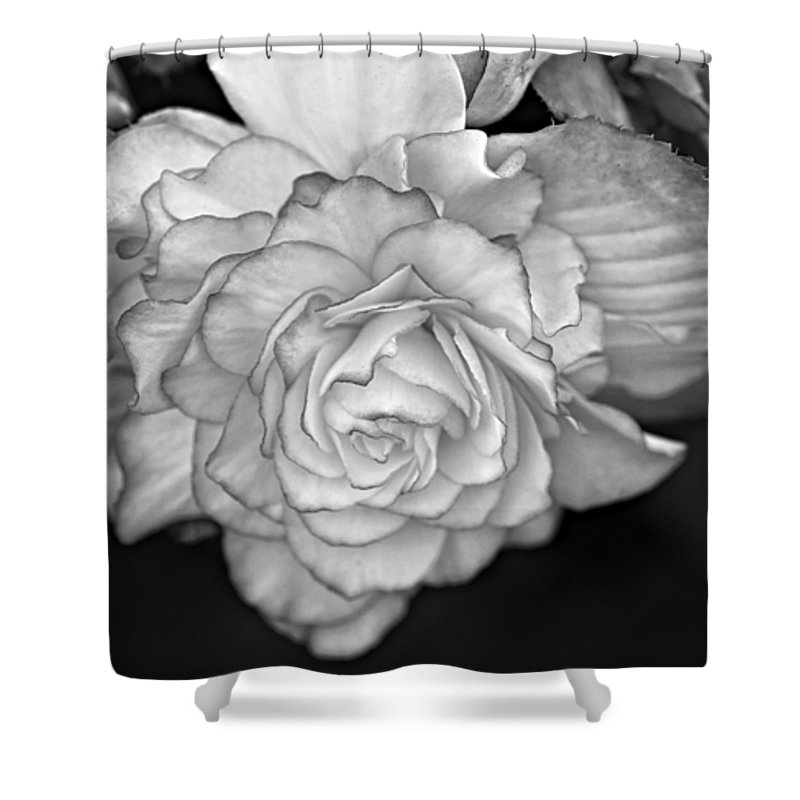Begonia Shower Curtain featuring the photograph Be Gentle Bw by Steve Harrington