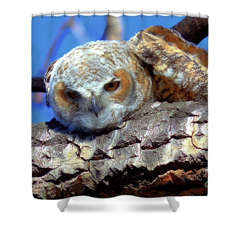 Owlet Shower Curtain featuring the photograph Be The Tiger by James Anderson