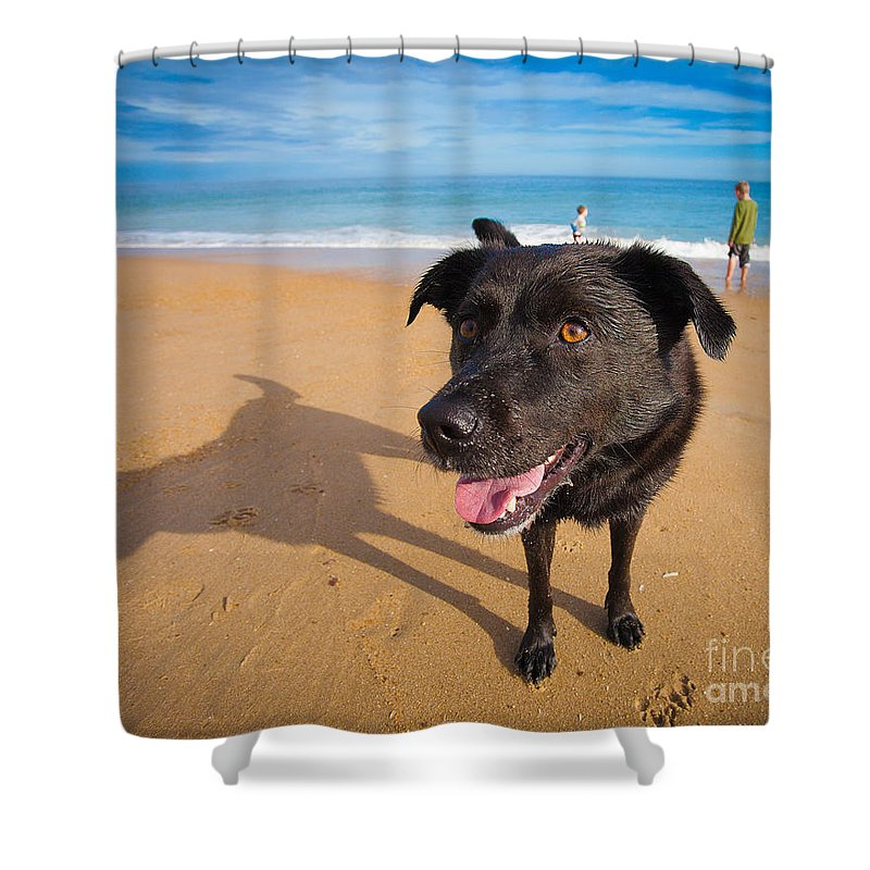 Dog Shower Curtain featuring the photograph Beach Dog by Michael Clubb