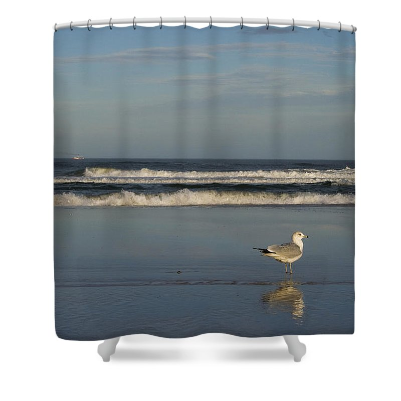 Sea Ocean Gull Bird Beach Reflection Water Wave Sky Shower Curtain featuring the photograph Beach Patrol by Andrei Shliakhau