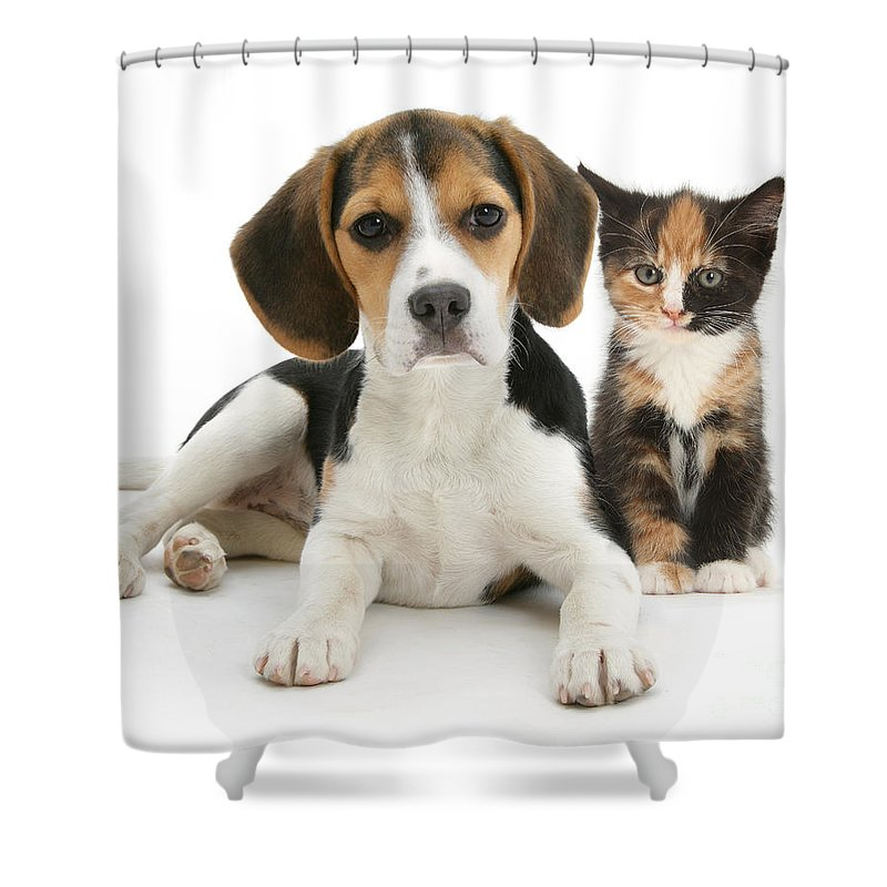 Animal Shower Curtain Featuring The Photograph Beagle And Calico Cat By Mark Taylor