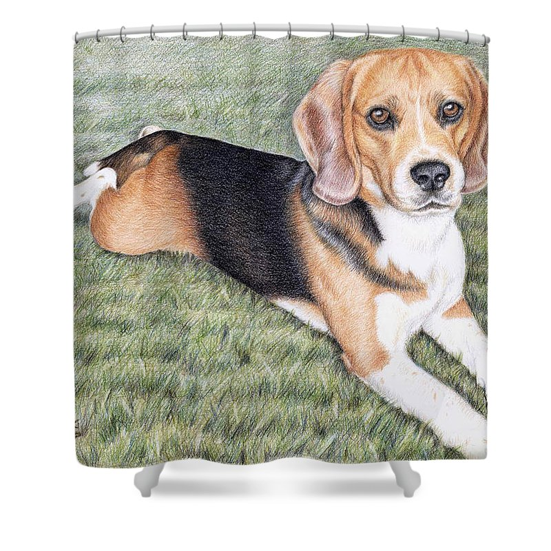 Dog Shower Curtain featuring the drawing Beagle by Nicole Zeug