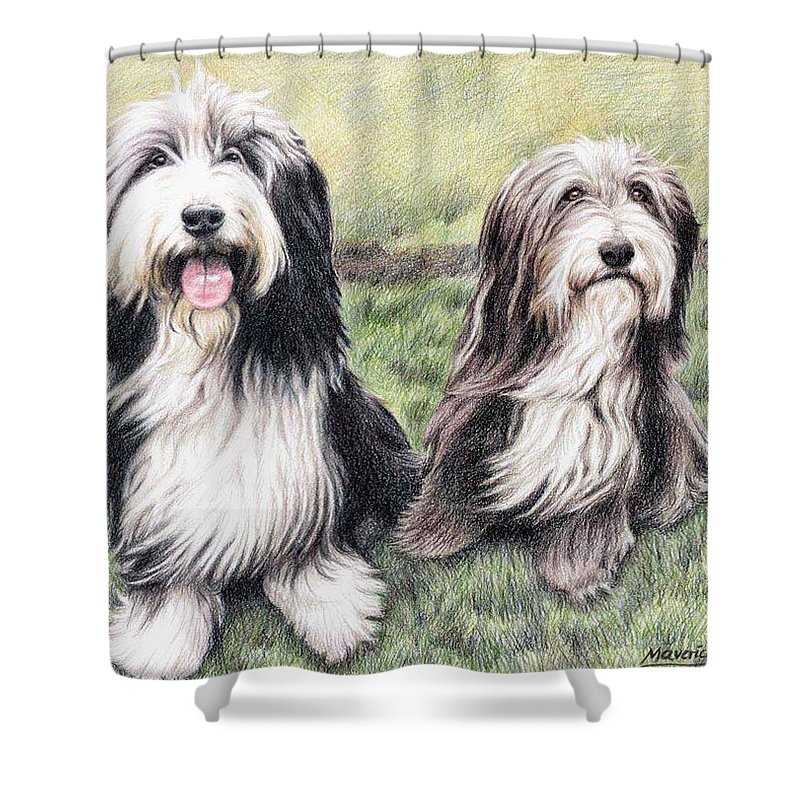 Dogs Shower Curtain featuring the drawing Bearded Collies by Nicole Zeug