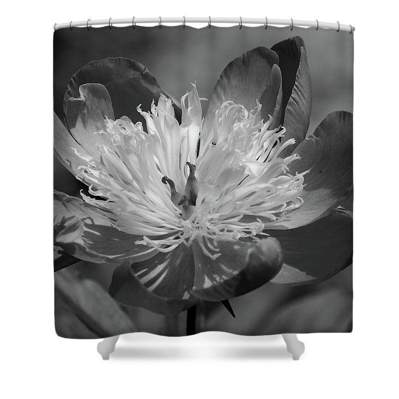 Peony Shower Curtain featuring the photograph Beautiful Anyway by Lori Tambakis