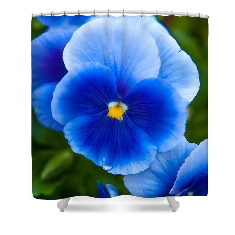 Spring Flowers Shower Curtain featuring the photograph Beautiful Blues by Az Jackson