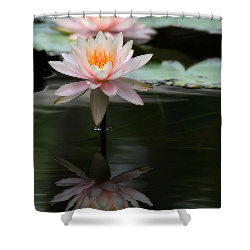 Water Lily Shower Curtain featuring the photograph Beautiful Colorado Water Lilies by Sabrina L Ryan