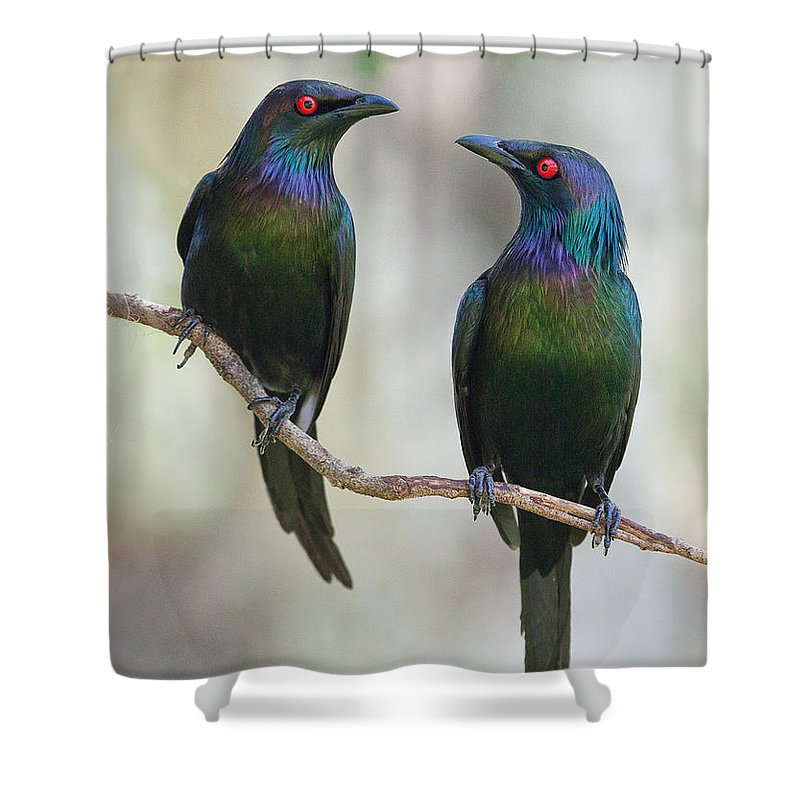 Starlings Shower Curtains