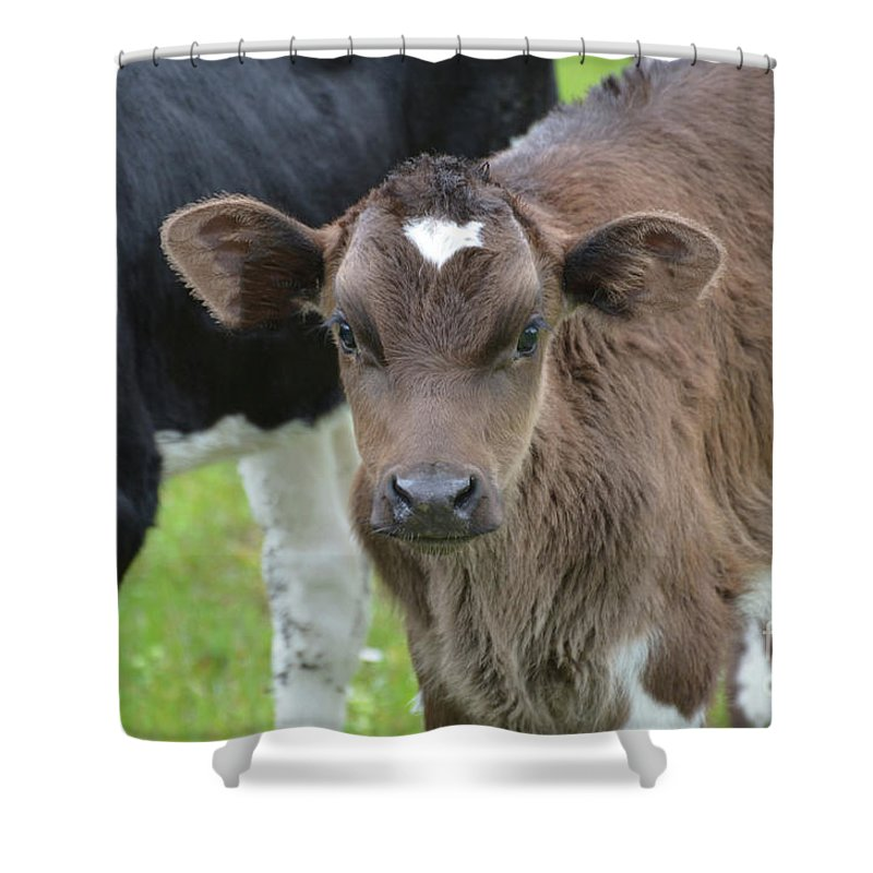Cow Shower Curtain featuring the photograph Beautiful Face Of A Brown Calf by DejaVu Designs