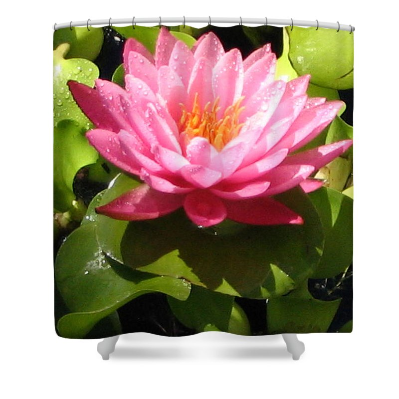 Nature Shower Curtain featuring the photograph Beautiful by Line Gagne