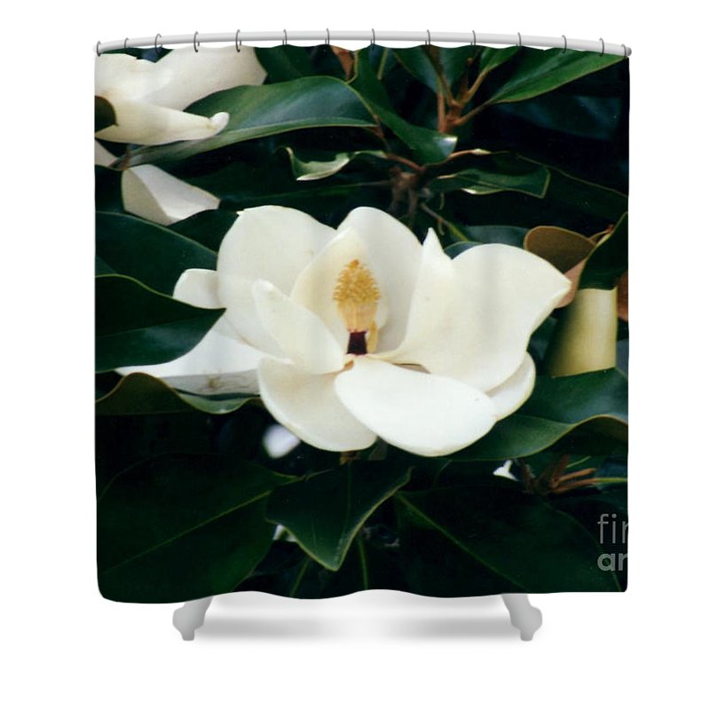 Shower Curtain featuring the photograph Beautiful Magnolia by Ruth Housley