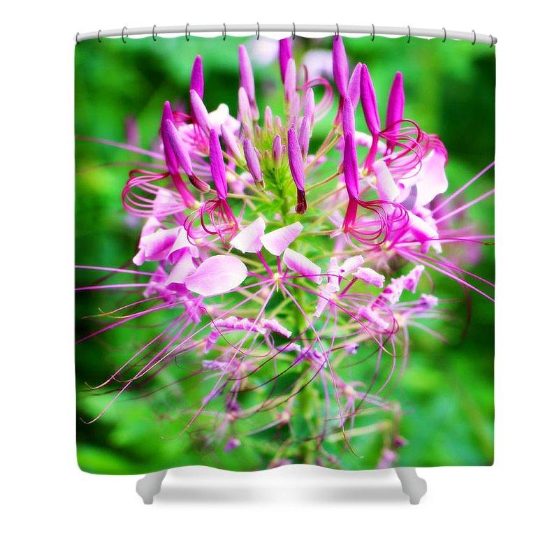 Beautiful pink purple spike flower shower curtain for sale by kathy pink purple flower shower curtain featuring the photograph beautiful pink purple spike flower by mightylinksfo