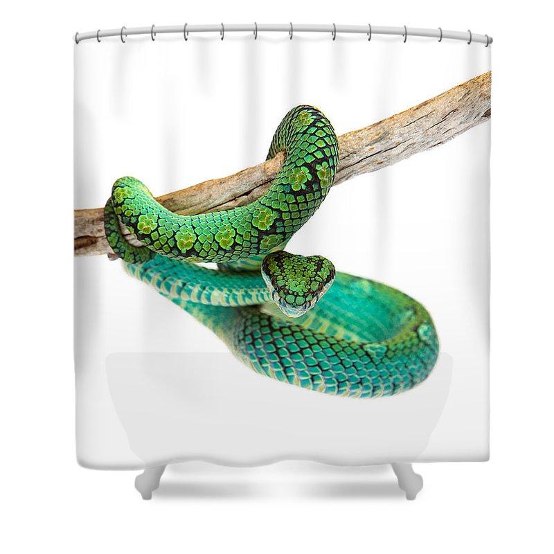 Viper Shower Curtains