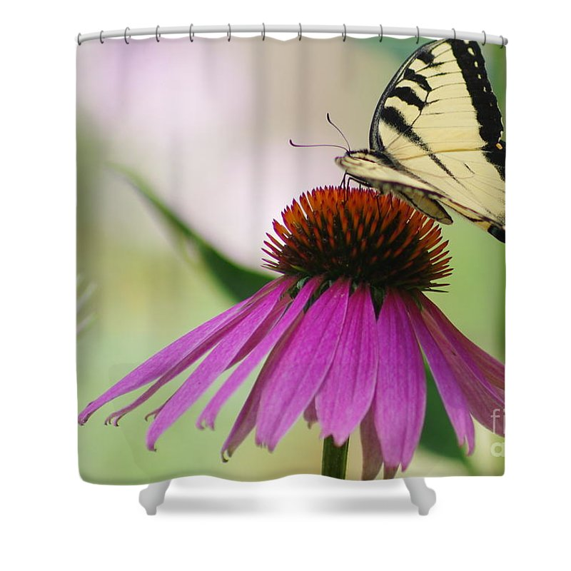 Shower Curtain featuring the photograph Beautiful Summer by Kitrina Arbuckle