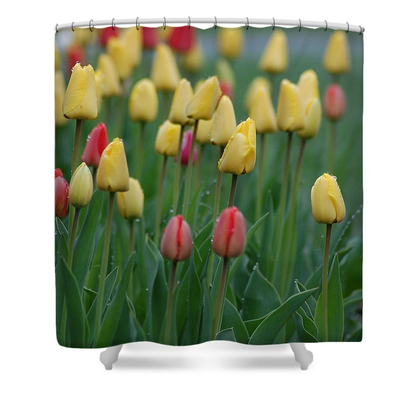 Tulips Shower Curtain featuring the photograph Beautiful Tulips by Donna Bentley