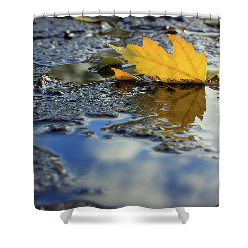 Leaf Shower Curtain featuring the photograph Beauty Above And Below Me by Viviana Nadowski