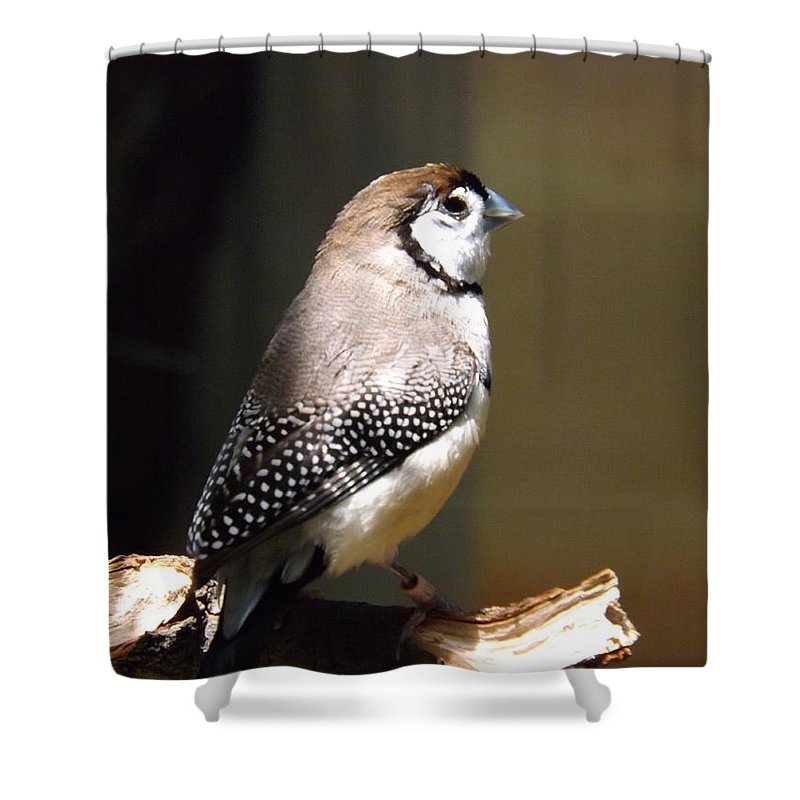 Owl Shower Curtain featuring the photograph Beauty In Light by Sara Raber