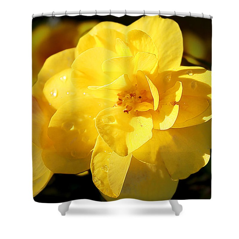 Flower Shower Curtain featuring the photograph Beauty In Yellow by Milena Ilieva